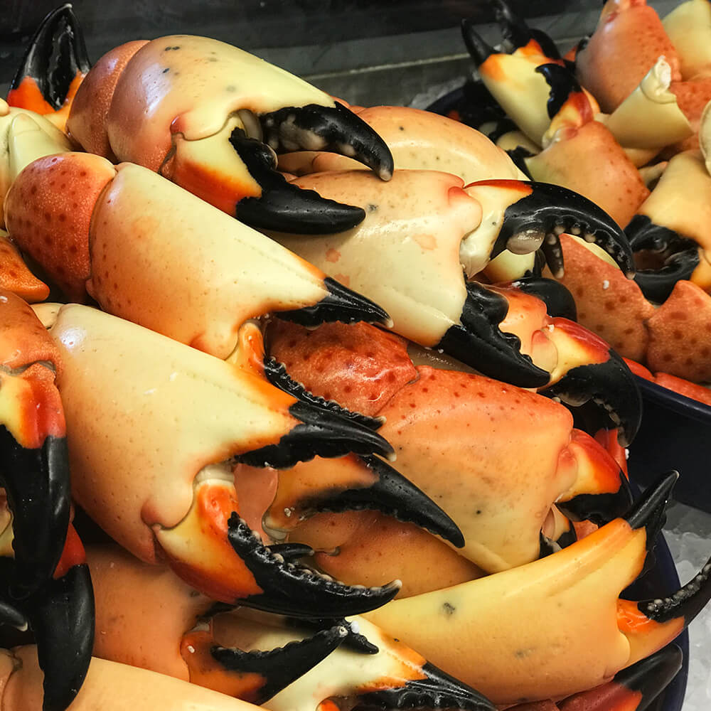 Large | Florida Stone Crab Claws